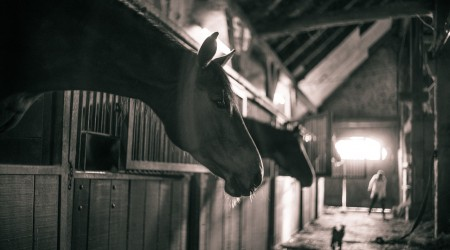 box-cheval